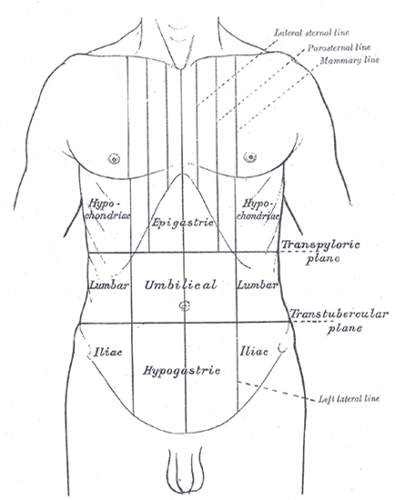 klinisk abdominal overflateanatomi